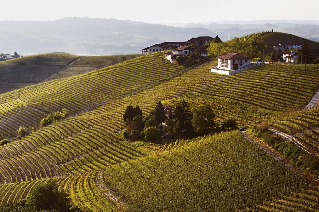 Unverkennbar Piemont. Wo die höchsten Punkte der Hügel Sorì oder Bricco genannt werden, wo im Frühjahr der Schnee zuerst schmilzt – ein Hinweis, dass es sich um erstklassige Lagen handelt. Für Barbaresco und Barolo.